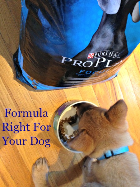Formula Right For Your Dog